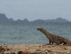 UNESCO minta proyek di Pulau Komodo dihentikan